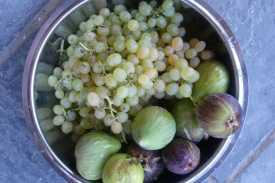 Fruits from the farm trees